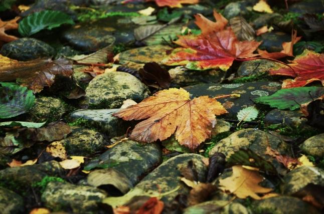 autumn-979667