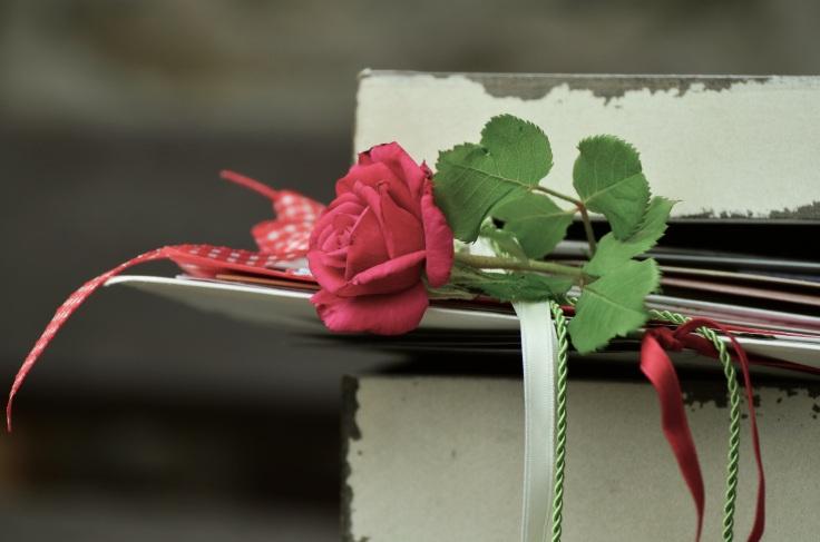 rose-889572