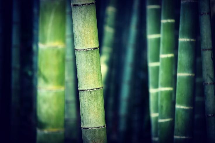 bamboo banner