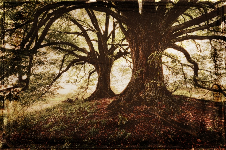 tree banner