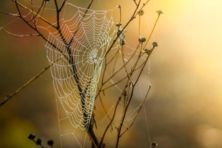 cobweb-1025021_1280
